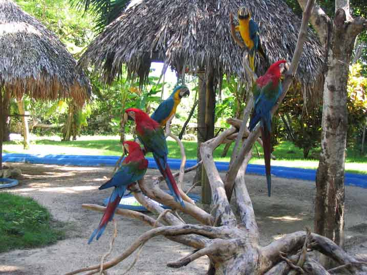 Manati Park 2